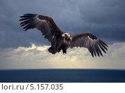 Купить «Летающий черный гриф», фото № 5157035, снято 23 августа 2019 г. (c) Яков Филимонов / Фотобанк Лори