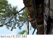 Дерево, растущее над скалистым обрывом, вид снизу. Стоковое фото, фотограф Александр Соловьев / Фотобанк Лори