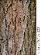 Купить «Кора дерева», фото № 5158223, снято 13 октября 2013 г. (c) Фесенко Сергей / Фотобанк Лори