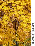Осенние краски. Стоковое фото, фотограф Бронислав Богачевский / Фотобанк Лори