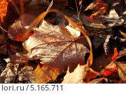 Золотая осень. Стоковое фото, фотограф Сергей Войнов / Фотобанк Лори