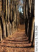 Аллея в осеннем лесу. Стоковое фото, фотограф Екатерина Воякина / Фотобанк Лори