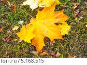 Осень. Стоковое фото, фотограф Кухаренко Ефим / Фотобанк Лори