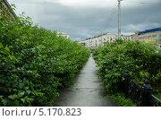 Аллея (2013 год). Редакционное фото, фотограф Сергей Филиппов / Фотобанк Лори