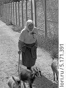 Бабушка с козами (2013 год). Редакционное фото, фотограф Роман Басманов / Фотобанк Лори