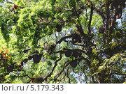 Дикие пчелы в ульях на дереве. Стоковое фото, фотограф Михаил Коханчиков / Фотобанк Лори