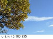 Коричнево зелёные осенние листья дуба на фоне голубого неба. Стоковое фото, фотограф Вячеслав Сапрыкин / Фотобанк Лори