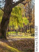 Ива. Стоковое фото, фотограф Александр Каримов / Фотобанк Лори