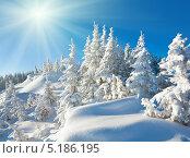 Купить «Красивый зимний пейзаж с елями в солнечный день», фото № 5186195, снято 8 марта 2010 г. (c) Юрий Брыкайло / Фотобанк Лори