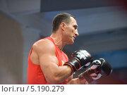 Купить «Боксер Виталий Кличко на тренировке», фото № 5190279, снято 2 октября 2013 г. (c) Малышев Андрей / Фотобанк Лори