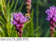 В поисках пыльцы. Стоковое фото, фотограф Дмитрий / Фотобанк Лори