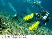 Купить «Группа аквалангистов», фото № 5210123, снято 4 февраля 2013 г. (c) Сергей Дубров / Фотобанк Лори