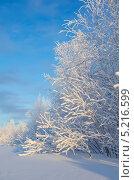 Зимний пейзаж. Стоковое фото, фотограф Икан Леонид / Фотобанк Лори
