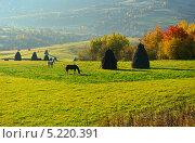Купить «Лошади  на пастбище», фото № 5220391, снято 12 октября 2013 г. (c) Эдуард Кислинский / Фотобанк Лори