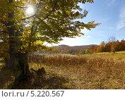 Купить «Буковый лес в Карпатах», фото № 5220567, снято 15 февраля 2019 г. (c) Эдуард Кислинский / Фотобанк Лори