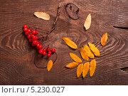 Купить «Осенние рябиновые листья и ягоды на деревянной поверхности», фото № 5230027, снято 10 октября 2013 г. (c) Наталья Двухимённая / Фотобанк Лори