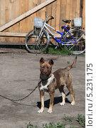 Собака во дворе. Стоковое фото, фотограф Константин Челомбитко / Фотобанк Лори