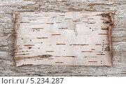 Купить «Береста на деревянном фоне», фото № 5234287, снято 4 ноября 2013 г. (c) Darkbird77 / Фотобанк Лори
