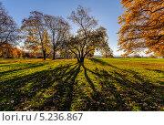 Коломенское осенью (2013 год). Стоковое фото, фотограф Тимур Уразов / Фотобанк Лори