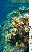 Купить «Морские кораллы», фото № 5244707, снято 18 сентября 2010 г. (c) Алексей Сварцов / Фотобанк Лори