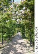 Купить «Крытая зеленая аллея, Сочи», фото № 5246407, снято 20 мая 2013 г. (c) Александр Замараев / Фотобанк Лори
