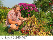 Мужчина средних лет на дачном участке. Стоковое фото, фотограф Юрий Морозов / Фотобанк Лори