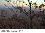 Исход осени. Стоковое фото, фотограф Валера Яронский / Фотобанк Лори