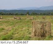 Купить «Прессованное в рулоны сено на лугу», фото № 5254667, снято 29 июня 2012 г. (c) Олег Рубик / Фотобанк Лори