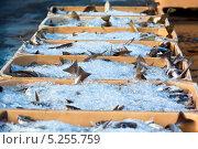 Купить «Свежий улов рыбы во льду в пластиковом контейнере», фото № 5255759, снято 15 августа 2012 г. (c) Анастасия Золотницкая / Фотобанк Лори