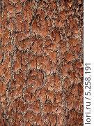 Купить «Кора секвойи», фото № 5258191, снято 21 сентября 2013 г. (c) Морозова Татьяна / Фотобанк Лори