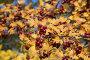 Ягоды боярышника осенью, эксклюзивное фото № 5263463, снято 15 октября 2013 г. (c) Алексей Гусев / Фотобанк Лори