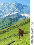 Лошадь на зеленом лугу на фоне гор, фото № 5264143, снято 28 июня 2013 г. (c) Кмить Иван / Фотобанк Лори