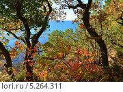 Купить «Яркие осенние листья на фоне моря», эксклюзивное фото № 5264311, снято 10 ноября 2013 г. (c) Игорь Архипов / Фотобанк Лори