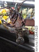 Омар, морской рак, морепродукты. Стоковое фото, фотограф Степанова М Е / Фотобанк Лори