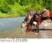 Две лошади на водопое у горной реки. Стоковое фото, фотограф Наталия Давидович / Фотобанк Лори