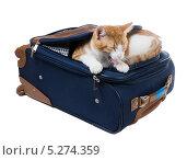 Купить «Рыжий кот зевает лежа в кармане чемодана», фото № 5274359, снято 15 ноября 2013 г. (c) Ирина Кожемякина / Фотобанк Лори