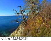 Купить «Осенний пейзаж с видом на море», фото № 5276643, снято 23 июля 2019 г. (c) Игорь Архипов / Фотобанк Лори