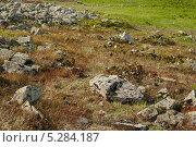 Камни летом. Стоковое фото, фотограф Анастасия Ефремова / Фотобанк Лори