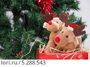Купить «Игрушечные олени в подарочной коробке на фоне елки», фото № 5288543, снято 24 октября 2013 г. (c) Asja Sirova / Фотобанк Лори