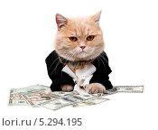 Купить «Богатый рыжий кот сидит на деньгах», фото № 5294195, снято 22 ноября 2010 г. (c) Артем Поваров / Фотобанк Лори