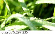 Купить «Роса на траве», видеоролик № 5297235, снято 23 ноября 2013 г. (c) Виктор Тихонов / Фотобанк Лори
