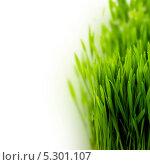 Купить «Зеленая трава на белом фоне. Место для текста», фото № 5301107, снято 11 февраля 2013 г. (c) Наталия Кленова / Фотобанк Лори