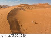 Купить «Вид на песчаную дюну в национальном парке Намиб-Науклуфт, Намибия, Южная Африка», фото № 5301599, снято 18 июня 2013 г. (c) Николай Винокуров / Фотобанк Лори
