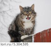 Мяукающая кошка, сидит на заборе во время снегопада. Стоковое фото, фотограф Елена Носик / Фотобанк Лори