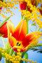 Весенний букет с яркими тюльпанами, фото № 5307375, снято 9 марта 2013 г. (c) Игорь Соколов / Фотобанк Лори
