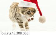 Купить «Котенок в новогодней шапке пятится назад», видеоролик № 5308055, снято 26 ноября 2013 г. (c) Серёга / Фотобанк Лори