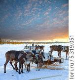 Купить «Тур на северных оленях», фото № 5319051, снято 25 февраля 2012 г. (c) Владимир Мельников / Фотобанк Лори