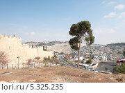 Купить «Одинокое дерево у стен древнего города Иерусалим. Израиль», фото № 5325235, снято 12 ноября 2013 г. (c) Александр Овчинников / Фотобанк Лори