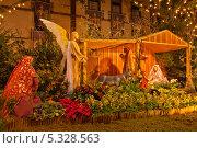 Купить «Новый год на Мадейра. Вертепная композиция из тропических цветов, орхидей и пуансетий в центре Фуншала», фото № 5328563, снято 22 декабря 2011 г. (c) Виктория Катьянова / Фотобанк Лори