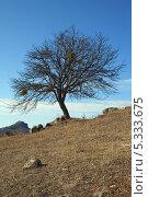 Купить «Дерево глубокой осенью на горном склоне», фото № 5333675, снято 22 ноября 2013 г. (c) Игорь Веснинов / Фотобанк Лори